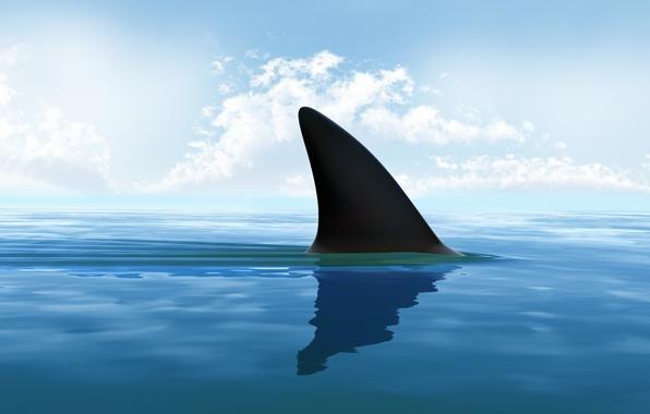 Картинка sea, shark, shark fin
