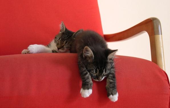 Картинка кресло, котята, двое, спят, красная накидка