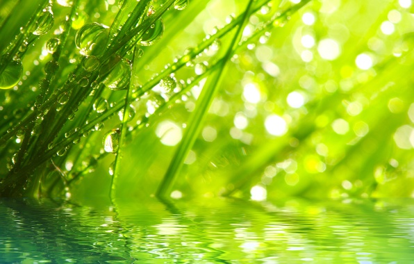 Картинка трава, вода, капли, макро, лучи, природа, роса, утро, nature, water, macro, rays, morning, the grass, …