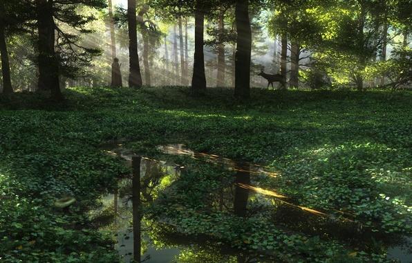 Картинка лес, вода, природа, человек, растения, арт, лужи, косуля, солнечные лучи