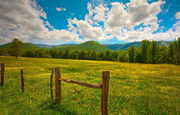 Картинка зелень, лето, трава, облака, цветы, холмы, столбы, забор, желтые