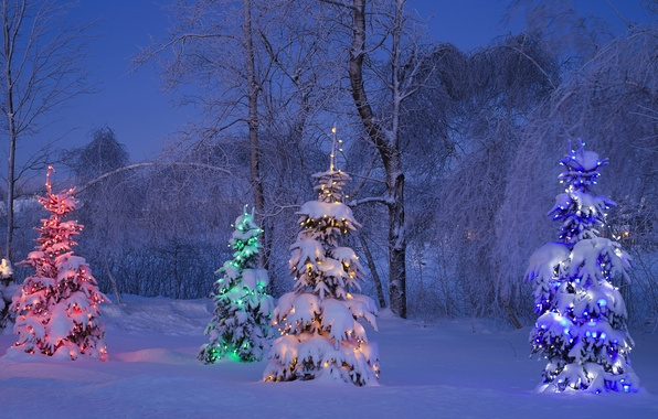 Картинка зима, иней, снег, деревья, синий, желтый, красный, огни, дерево, елка, ель, вечер, Канада, зелёный, light, …