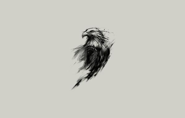 Картинка взгляд, орел, рисунок, крылья, минимализм, перья, клюв, арт, Животные, animals, minimalism, eyes, art, wings, feathers, …