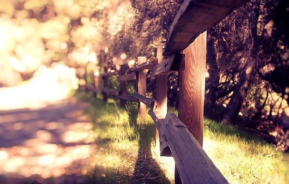 Картинка лето, трава, природа, фон, обои, забор, растения, размытость, ограждение, wallpapers