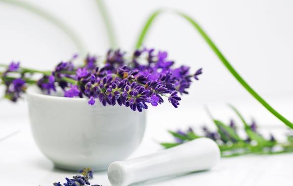 Картинка цветы, фиолетовые, лаванда, ступка