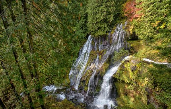 Картинка осень, лес, природа, скала, камни, водопад