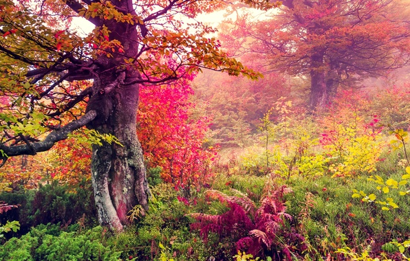 Картинка осень, лес, листья, деревья, пейзаж, forest, autumn, leaves, tree, fall