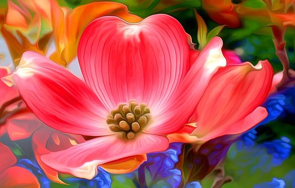 Картинка цветок, макро, лепестки, сад, луг