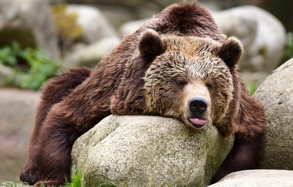Картинка камни, релакс, медведь, топтыгин
