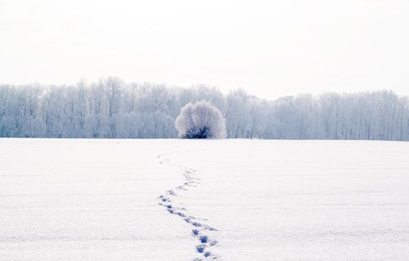Картинка холод, зима, белый, снег, деревья, пейзаж, следы, природа, фон, дерево, widescreen, обои, wallpaper, широкоформатные, background, …