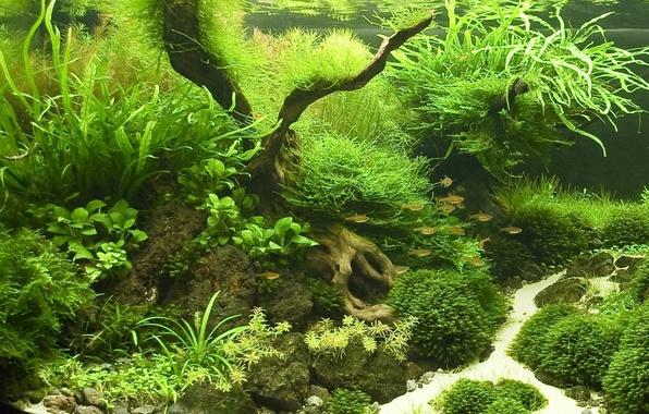 Картинка рыбки, аквариум, растения