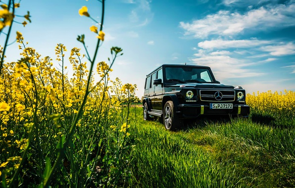 Картинка Mercedes-Benz, Car, Sky, Grass, Front, Flowers, AMG, Black, Sun, Summer, G63