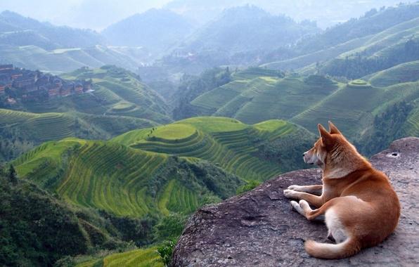 Картинка пейзаж, горы, вид, собака
