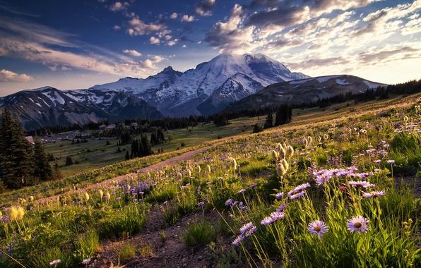 Картинка небо, облака, деревья, цветы, горы, поляна, вечер, Вашингтон, США, национальный парк, солнечный свет