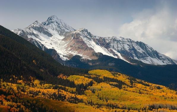 Картинка лес, снег, деревья, горы, природа, вершины