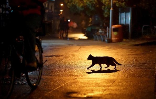 Картинка кошка, ночь, город, огни, улица, силуэт