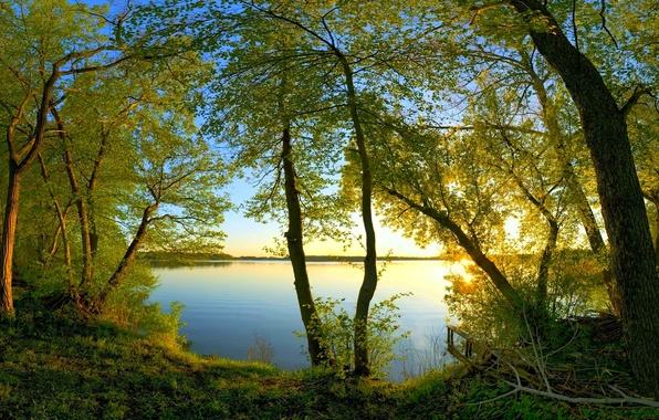 Картинка вода, солнце, свет, ветки, листва, Деревья