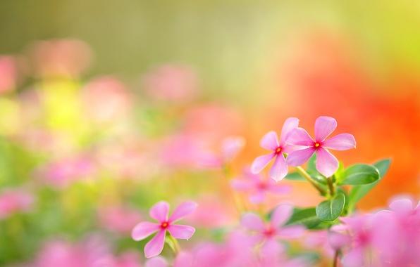 Картинка поле, природа, лепестки, луг, соцветие