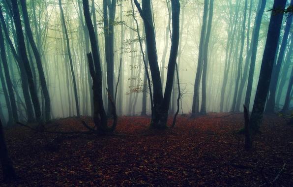 Картинка осень, лес, листья, деревья, природа, туман, фон, обои
