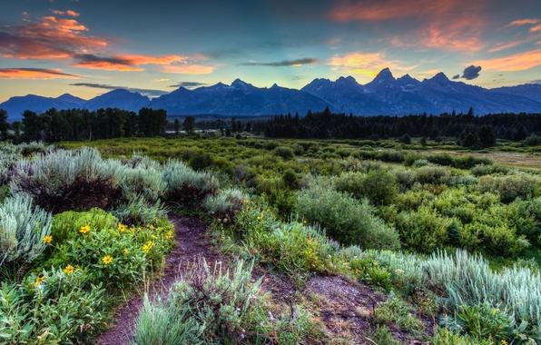 Картинка лес, небо, трава, облака, деревья, закат, цветы, горы, США, Wyoming, Grand Teton National Park, Jackson …