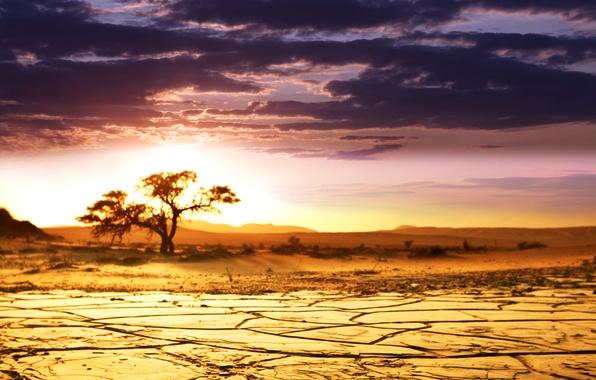 Картинка песок, небо, облака, пейзаж, дерево, рассвет, красота, горизонт, саванна, Африка, Sunrise, African landscape