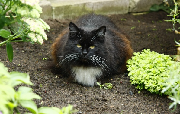 Картинка кошка, взгляд, кошки, огород, в деревне