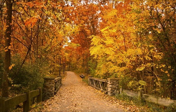 Картинка осень, листья, деревья, мост, парк, путь, скамейки, фонарные столбы