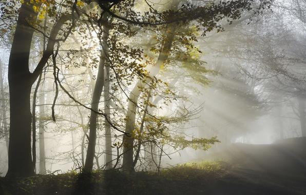 Картинка дорога, лес, свет, утро
