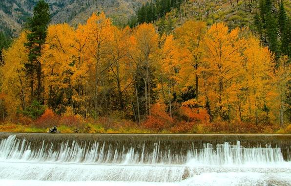 Картинка осень, лес, деревья, река, водопад, поток, пороги