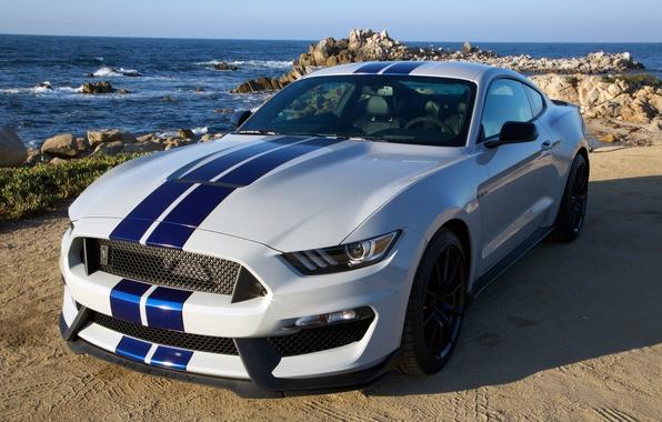Картинка Mustang, Ford, Shelby, мустанг, форд, GT350, 2015