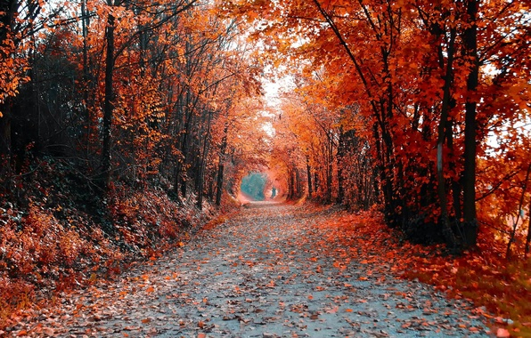 Дорога деревья пейзаж осень цвет