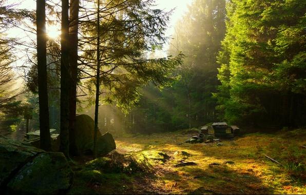 Картинка лес, солнце, лучи, деревья, закат, стол, отдых, пикник, скамья