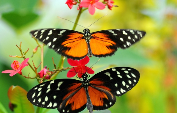 Картинка цветок, узор, бабочка, растение, крылья, мотылек