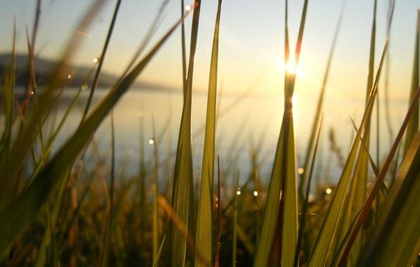 Картинка трава, вода, солнце, озеро, пруд