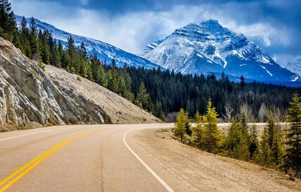 Картинка дорога, лес, деревья, пейзаж, горы, скалы, поворот, ели, Канада, Альберта, Alberta, Canada, Jasper National Park, …