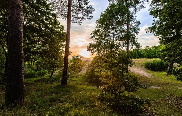 Картинка лес, небо, трава, солнце, облака, деревья, восход, листва, тропинка