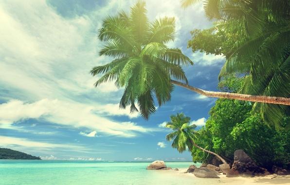 Картинка пляж, лето, небо, облака, природа, тропики, камни, пальмы, океан, рай, красиво, beach, sky, clouds, stones, …