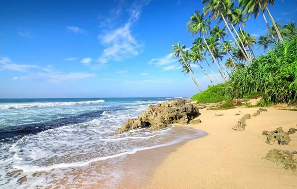 Картинка песок, море, пляж, пальмы, берег, summer, beach, sea, sand, shore, paradise, palms, tropical