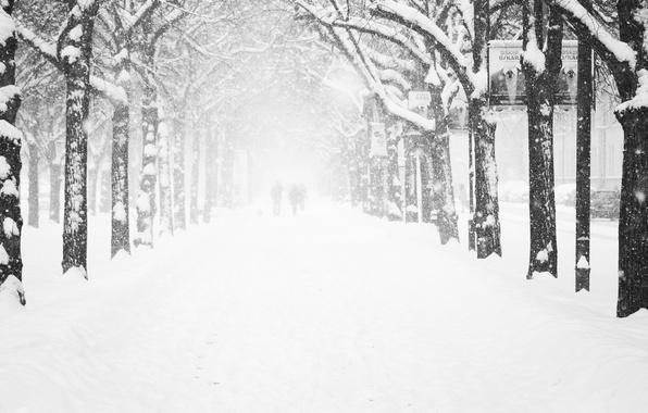 Картинка холод, зима, иней, дорога, женщины, девушка, деревья, снежинки, люди, города, девушки, дерево, улица, женщина, человек, ...
