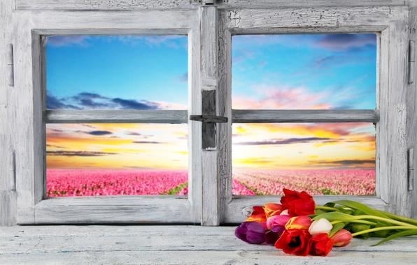 Картинка поле, небо, цветы, рассвет, вид, горизонт, окно, тюльпаны, подоконник