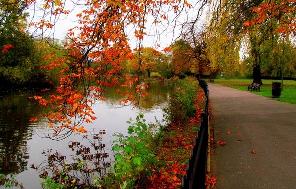 Картинка осень, лес, небо, листья, вода, деревья, скамейка, природа, парк, река, вид, hdr, прогулка, forest, аллея, …