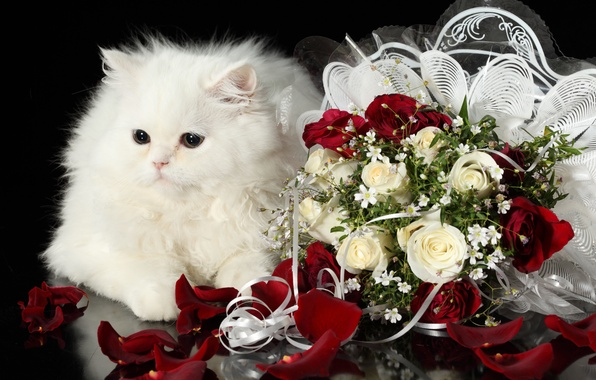 Картинка белый, кот, розы, букет, пушистый