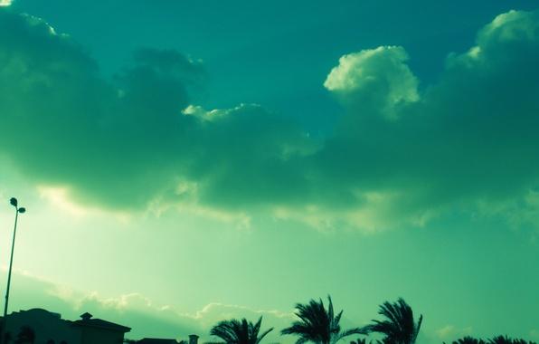 Картинка небо, облака, зеленый, пальмы, цвет