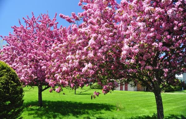 Картинка небо, деревья, цветы, природа, красота, весна, сад, цветение, цветут, цветущие, в цвету