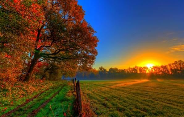 Картинка дорога, осень, лес, трава, листья, солнце, деревья, закат, природа, colors, colorful, луг, grass, forest, road, …