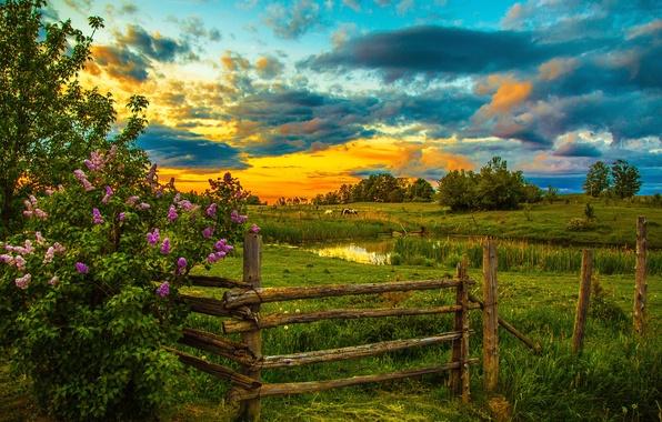 Картинка небо, трава, облака, деревья, закат, пруд, забор, лошади, кусты, лужайка, сирень