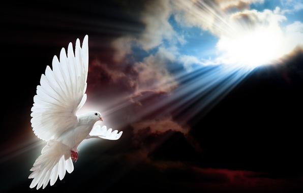 Картинка небо, солнце, лучи, птица, голубь, полёт