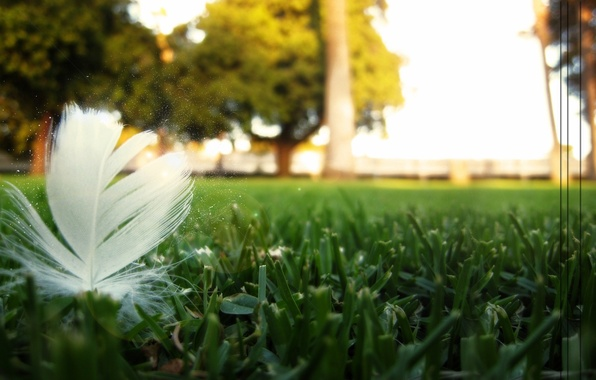 Фото обои пыльца, природа, перо, передний план, газон