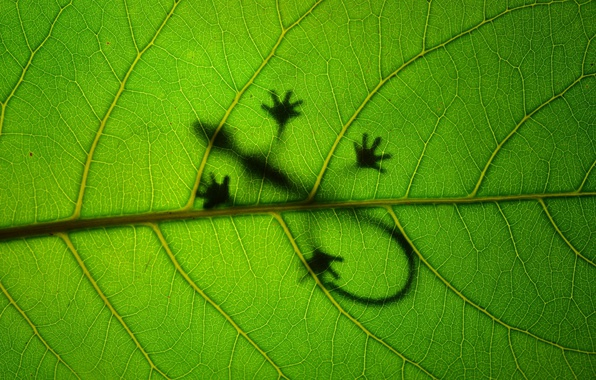 Картинка макро, лист, зеленый, фон, текстура, ящерица