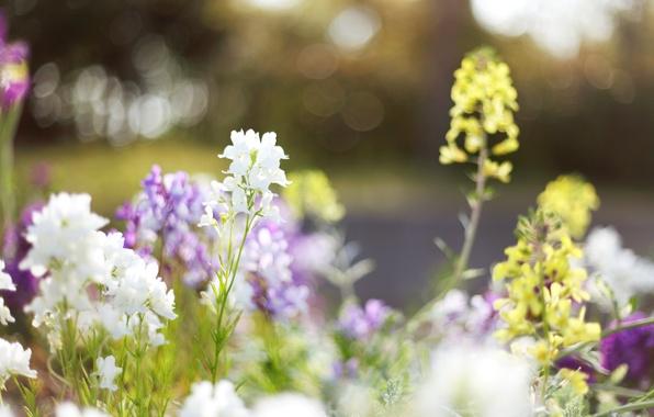 Картинка трава, свет, цветы, природа, блики, поляна, растения, весна, желтые, размытость, светлые, белые, цветение, flowers, сиреневые